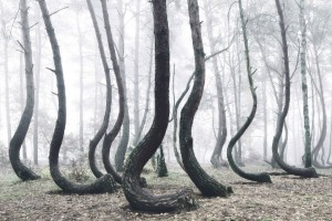 the-crooked-forest